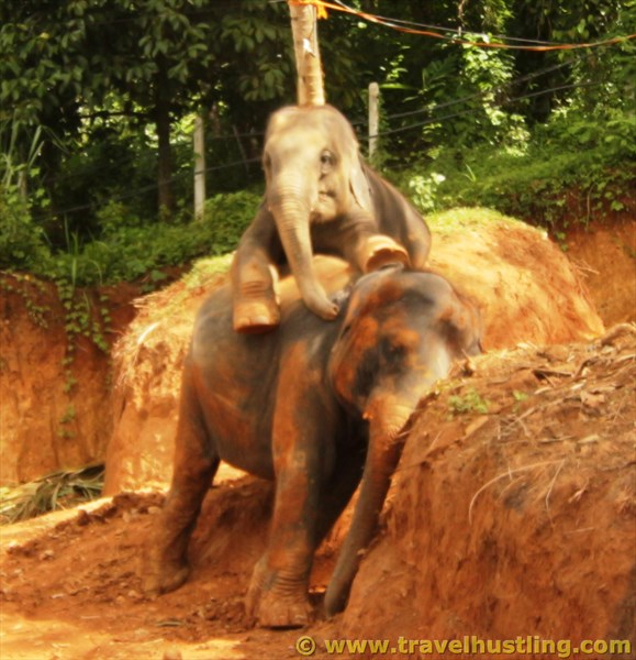 Wathsu & Sujee at Elephant freedom project