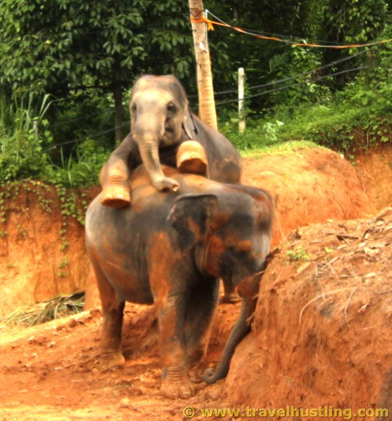 Wathsu & Sujji at Elephant freedom project